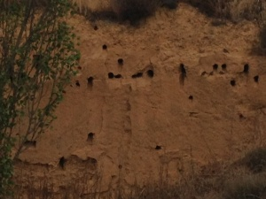 This was cool, lots of erosion to the side, we ate some olives here, birds going in and out of holes