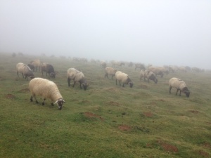 Sheep in the mist, we could hardly see them, but they wore bells.