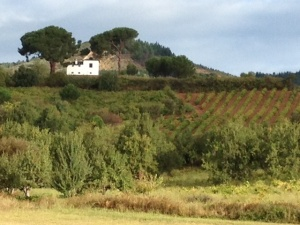 A house on a hill overlooking a vineyard